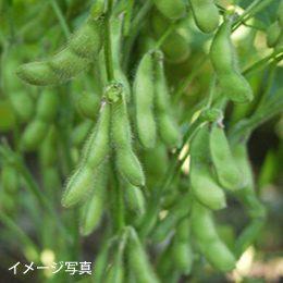 仁助屋茶豆